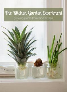 The other day I walked into my mom friend's kitchen and found the top of a pineapple sitting in a jar of water. I thought it was odd so I immediately quizzed her about it and she politely told little-ol-woefully-uninformed-me that if you plant the top of a pineapple, it will sprout. What?! I was …