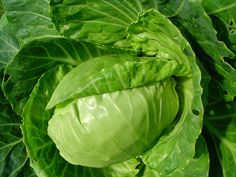 Cabbages http://www.cost278.org/cabbage-soup-diet/