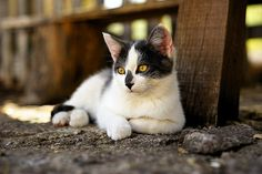 Cat       Motza the cat  Posted by Sunsword & Moonsabre  on 2014-03-10 17:44:11      Tagged:  , cat  - http://newsyork.gq/cat-71/