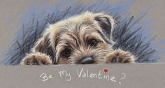 Border Terrier Pack of 10 Christmas Cards Happy Christmas by Paul Doyle Border Terrier Welpen, Border Terrier Puppy, Terrier Dogs, Terriers, Cute Dogs And Puppies, I Love Dogs, Doggies, Cute Boarders, Christmas Dog