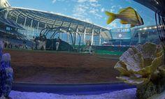 Marlins Park - backstop aquarium behind home plate