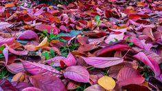 Herbst/autumn/fall