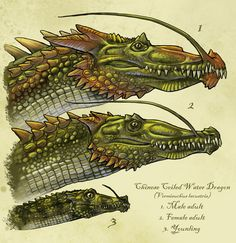 Chinese coiled dragon, Panlong by ~Onikaizer