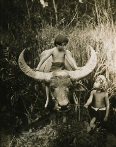 Asian water buffalo, Siam (Thailand), 1927. Photograph by Ernest B. Schoedsack, National Geographic Stock
