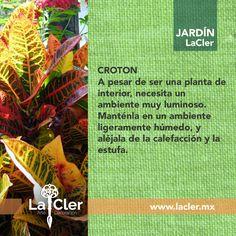 ¡¡Nos encanta su combinación de colores!!   Fotografía de: https://threepsandq.wordpress.com/   #jardín #plantas #hogar #homedecor #garden #tips #decoración