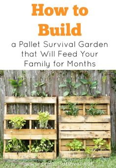 How to Build a Pallet Survival Garden that Will Feed Your Family for Months
