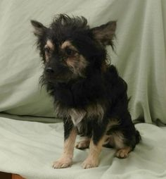 Brando is an 18-month-old terrier mix who weighs about 10 pounds. He does well with other dogs and is leash trained. The $250 adoption fee helps cover spay/neuter, vaccinations, microchip, vetting, food and care. Call Pets Without Partners at 243-6911. Go to www.petswithoutpartners.org. Go to www.redding.com for more adoptable pets.