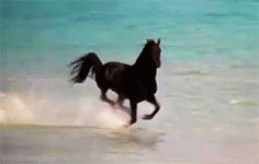 The Black Stallion #beach #black #movie #canter #horse #gif #gallop #stallion