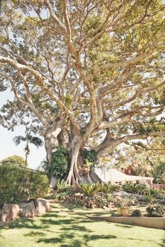 The Fig Tree Restaurant - Ewingsdale, Byron Bay… Beautiful Places To Visit, Places To See, Places To Travel, Tree Restaurant, Australia Travel, Australia 2018, Byron Bay Weddings, Beautiful Wedding Venues, Indoor Outdoor