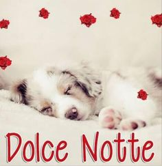 dolce notte immagini Good Night, Animals And Pets, Instagram Posts, Dolce, Nighty Night, Romanticism, Have A Good Night