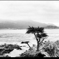 The Lone Cypress, 17 Mile Drive, Pebble Beach, CA