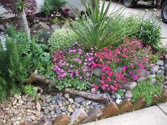 easy care rock garden - we'll be doing something similar to this in front of our porch. Only have a few feet between concrete driveway and porch and this looks to be easier than grass and prettier as well! :D  More decorative grasses, hostas, annuals.