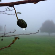 Droplet, Foggy Weather ♥