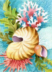 Shells & Corals main page