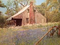 Old Texas Home with Bluebonnets & other Wild Flowers......also an old farm cultivator!
