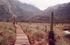 Rwenzori Mountains Trek