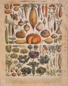 Legumbres y VegetalesLitografía 1900 por CastafioreOldPrints, €12.00