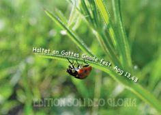 christliche Postkarte 85, Gnade, Ausharren, Marienkäfer - Bibel a la Carte - Christliche Karten