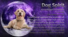 Power Animal, Spirit Guides, Spirit Animal, Pitbulls, Friendship, Love You, Dogs, Animals, Te Amo