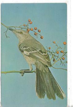 Mockingbird-Mimus Polyglottos-State Bird of Arkansas