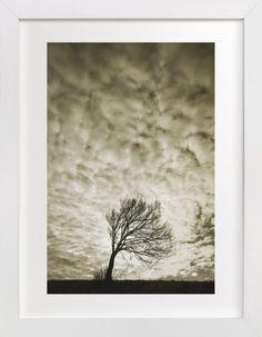 Sunny Tree by Uros Zagozen at minted.com