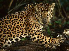 Animales en Peligro de Extinción, Ecuador