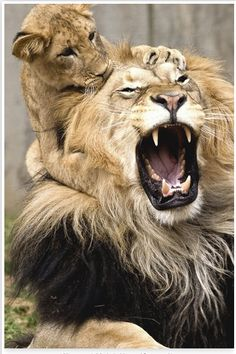 Photography...I never heard a roar like that! .... Michela #