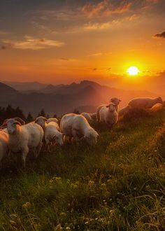 The best and wisest friend of man is an animal, let posting as many cute pets and beautiful nature Farm Animals, Cute Animals, Sheep Paintings, Sheep Art, Jesus Art, Sheep And Lamb, Foto Art, Farm Life, Belle Photo