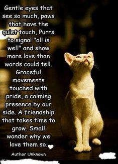 Crazy Cat Lady, Crazy Cats, Beautiful Cat Images, Pet Poems, Cat Tags, Kitten Meowing, Cat Posters, Cat Quotes, Funny Animal Pictures