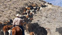 This authentic working cattle ranch in Cedarville, Northeastern California lets guests bring their own horse for trail riding and authentic California cattle drives.