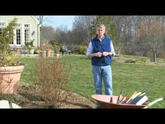 Video - How To Prune A Shrub Rose In 30 seconds. Pro Tip: Prune roses in the Spring. (I love Step One: Grab a beer. Growing Roses, Growing Herbs, Organic Gardening, Gardening Tips, Vegetable Gardening, Container Gardening, Pruning Knockout Roses, Starting Plants From Seeds, Types Of Roses