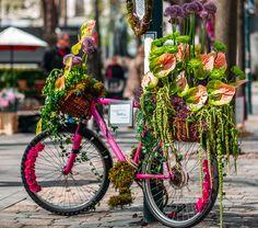 Ihana Helsinki -kaupunkifestivaali tuo kukkaloistoa Esplanadille  (c) Jussi Hellsten/Helsinki365