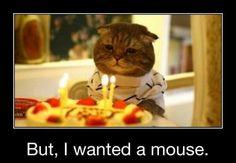 #birthday #cat #humor @BagderMaps