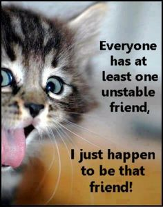 Funny cats | Top 35 most funniest cat quotes