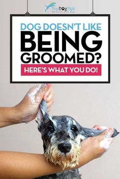 How To Train A Dog To Enjoy Grooming and Keep Him Calm: #DogsTraining