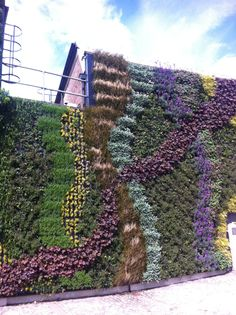 Great green wall now covering side of the rube station. Biophilic Architecture, Landscape Architecture, Green Facade, Privacy Screen Outdoor, Moss Wall, Church Design, Hardy Plants, What A Wonderful World, Patio