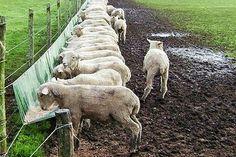 Deer Feeders, Hay Feeder, Farming In Canada, Cow House, Goat Barn, Animal Agriculture, Future Farms, Sheep Farm, The Good Shepherd
