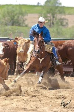 now there's a horse who enjoys his job!  cow cutting- 'like' if you know what it is!  Basically, it's riding a horse that can dance :)
