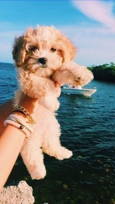 Super Cute Puppies, Baby Animals Super Cute, Cute Baby Dogs, Cute Little Puppies, Cute Dogs And Puppies, Cute Funny Animals, Doggies, Funny Dogs, Puppies Puppies