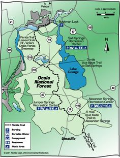Things to do in the Ocala National Forest