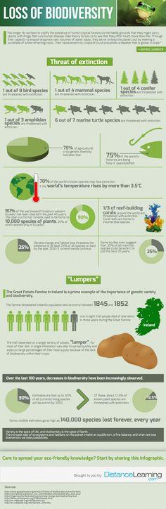 Una sorprendente infografica sulla perdita della biodiversità. (An astonishing loss of biodiversity infographic.)