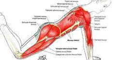 Эти пять упражнений дадут вам полную тренировку тела!Есть много типов упражнений. Но, как и большинство вещей в жизни, простейшие тренировки всегда лучше. Вот лучшие пять основных упражнений, кото