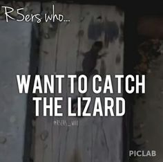 Only R5ers will under stand ♥ hahaha I want to catch the lizard!!!!