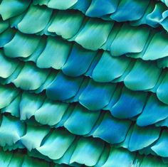 Scales from the wing of a  Peacock Butterfly [Inachis Io]. x420 magnification - From Microcosmos;  by Brandon Broll