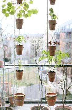 Window farming