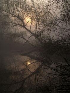 moonlight fog...