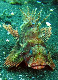 Deep sea fish Imagination at Work (Fish) Beautiful Sea Creatures, Deep Sea Creatures, Weird Creatures, Animals Beautiful, Under The Water, Life Under The Sea, Underwater Creatures, Underwater Life, Fauna Marina