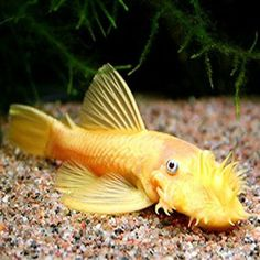 1000 images about love for fish on pinterest cichlids