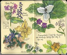 Fabulous nature journal page from Artist Sandy Williams (link has interview).