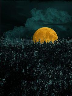 Petit: g'night, good people ♥ sweetest dreams